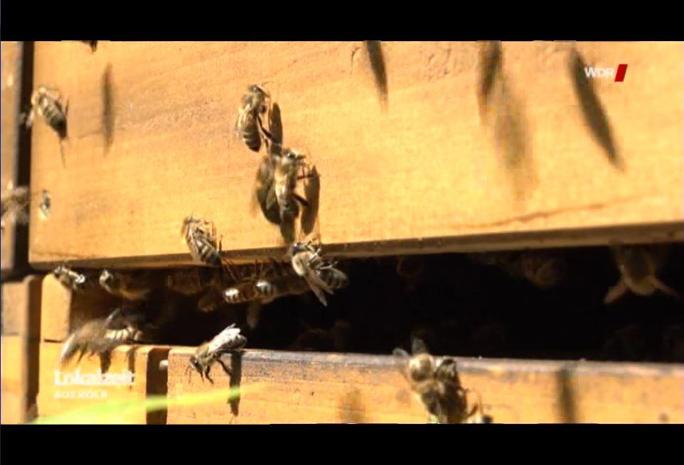 Flugloch Bienen