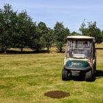 Einen Bienenschwarm auf dem Golfplatz Gut Velder in Pulheim